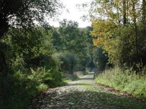 400 Jahre alter Waldweg durch die Schorfheide